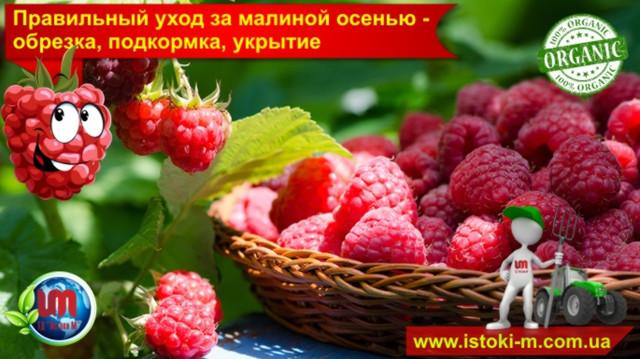 уход за малиной_подкормка малины осенью_обрезка малины осенью_органическое выращивание малины_удобрение органическое для подкормки малины_малина уход и подкормка