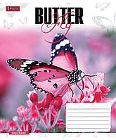 """Тетрадь 48 клетка """"1 Вересня"""" Butterflys"""