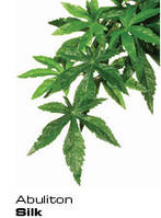 Растение абулитон большой ExoTerra Abuliton (large) (Hagen РТ 3052)