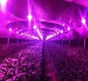 Фитолампы - лампи для рослин і акваріумів
