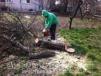 Срезать дерево. Обрезка деревьев цена.
