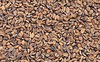 Фацелия пижмолистная (фацелія піжмолістна) семена (сидерат, медонос).