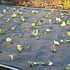 Черное агроволокно - спанбонд от сорняков
