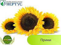 Семена подсолнечника ПРИМИ (вегетация 108-113дн.) НЕРТУС, толерантный к Евро-Лайтингу