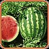 Семена арбуза Альянс (весовые от производителя)