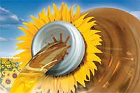 Семена подсолнечника Syngenta НК Конди