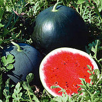 Семена арбуза Огонек (весовые семена от производителя)