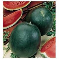 Семена арбуза Сахарный малыш (весовые семена от производителя)