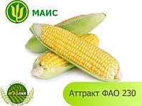 Гибрид Аттракт ФАО 230 семена кукурузы МАИС