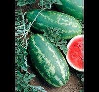 Семена арбуза Роял Маджести (весовые семена от производителя)
