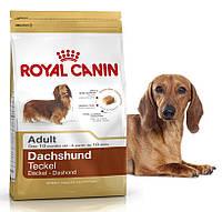 Корм для собак породы такса Royal Canin Dachshund Adult