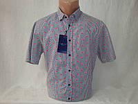 Мужская рубашка с коротким рукавом Piazza Italia, фото 1