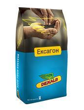 Семена озимого рапса Эксагон