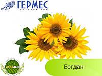Семена подсолнечника Богдан (вегетация 112-118 дн) Гермес, толерантный к Евро-Лайтингу