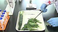 Экспресс-тест на пестициды