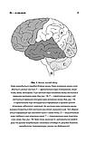 Ми – це наш мозок. Свааб Дік, фото 10