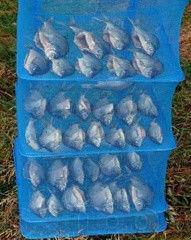 Сушилка для рыбы, грибов, сухофруктов, 5 полочек, защитит от насекомых 45*45*100 см - Shop-Point в Киеве
