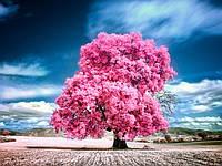Эфирное масло розового дерева 5мл