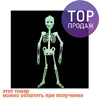 Скелет-конструктор светонакопительный средний / аксессуары для  праздников