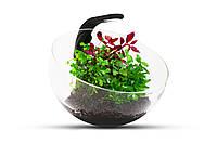 Wabi Set - декоративный аквариумный набор, фото 1