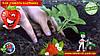 Как сажать клубнику