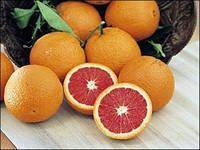 Апельсин Кара-Кара (Citrus sinensis Cara Cara navel orange) Комнатный
