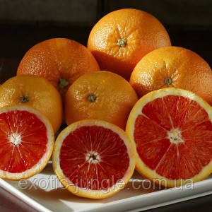 Апельсин Кара-Кара (Citrus sinensis Cara Cara navel orange) 20-25 см. Комнатный