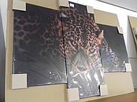 Картина-модульная (Фото-картина) 3 части Леопард
