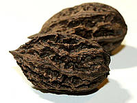 Орех маньчжурский Juglans mandshurica Max(саженцы)