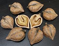 Орех Сердцевидный(саженцы)