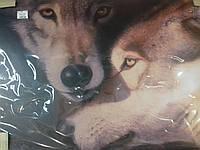 Картина-модульная (Фото-картина) Волчья нежность