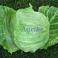 Семена капусты б/к Ориента F1 Аgri Saaten от 1 000 шт