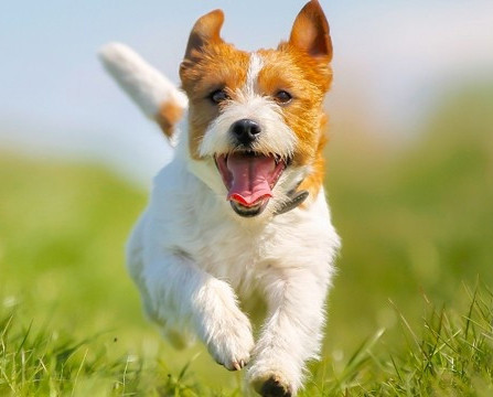 Глюкозамин с МСМ для собак VetIQ Maximum Strength Hip & Joint Soft Chews