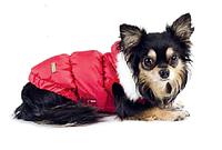 """Куртка - Жакет """"БОНЖУР"""", размер М для щенков и собак мелких пород"""