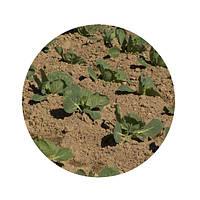 Техника для посадки капусты. Техніка для садіння капусти.