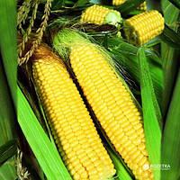 Гибрид кукурузы Почаевский 190 МВ