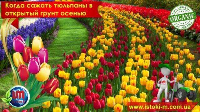 почвосмесь для цветов и кустарников_грунт для цветов и кустарников_вермигрунт для цветов и кустарников_грунт для ландшафтного озеленения_вермигрунт для ландшафтного озеленения_почвосмесь для ланшафтного озеленения_грунт для зимнего сада_почвосмесь для зимнего сада_удобрение органическое для подкормки цветов и кустарников_органическое удобрение для травяного газона_удобрени органическое для подкормки травяного газона_купить биогумус оптом_производство биогумуса_купить почвосмесь для цветов и кустарников_вермигрунт для ландшафтного озеленения_купить органические удобрения оптом_производство органических удобрений_грунт для цветов и кустарников купить оптом