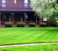 Универсальная газонная трава  5 кг