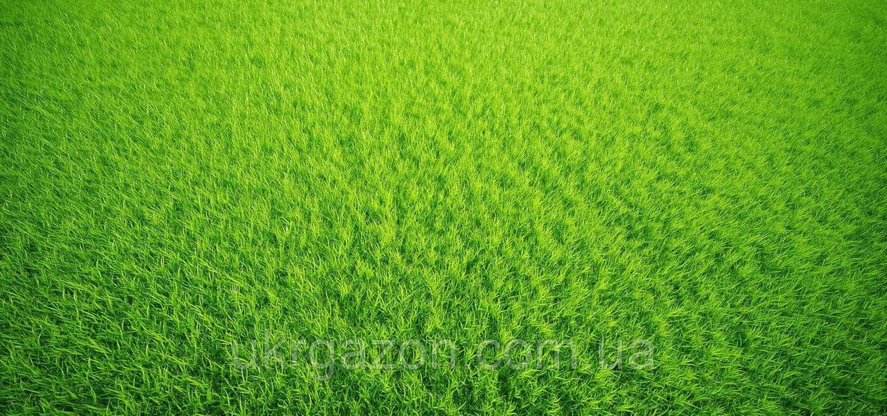 Универсальный газон 20 кг. Урожай 2019.