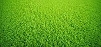 Универсальный газон 20 кг