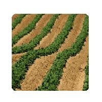 Техника для междурядной обработки почвы. Техніка для міжрядного обробітку грунту.