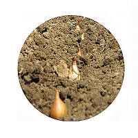 Техника для посадки лука. Техніка для садіння цибулі.