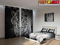 Фотокомплект тигр