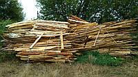 Обзелы на дрова (Сосновые)