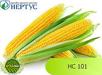 Семена кукурузы HC 101 НЕРТУС