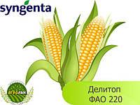 Семена кукурузы Делитоп ФАО 220 Сингента