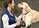 Flexi Giant M лента 8 м до 25 кг поводок-рулетка для собак, фото 2