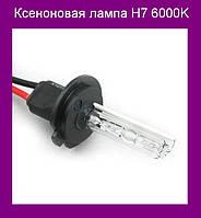 Ксеноновая лампа H7 6000K