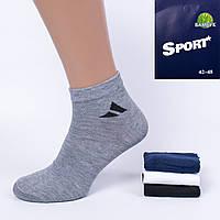 Мужские короткие носки Zoloto 01-04-1. В упаковке 12 пар