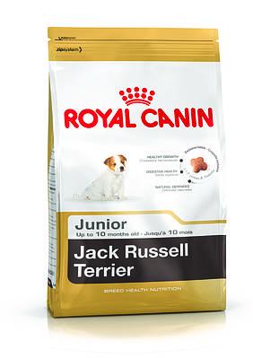 Джек-рассел-терьер до 10 месяцев 1,5 кг